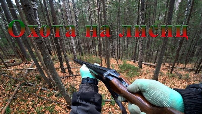 Охота с гончими на лисиц Вторая охота в сезоне 2020 2021 Кировская область