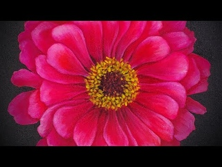 Zinnia Flower Acrylic Painting LIVE Tutorial