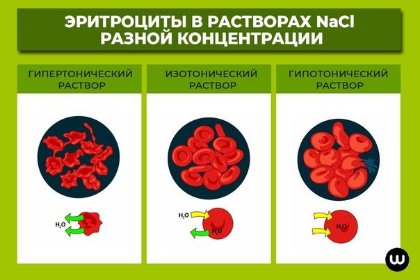 Действие гипертонического раствора на эритроциты