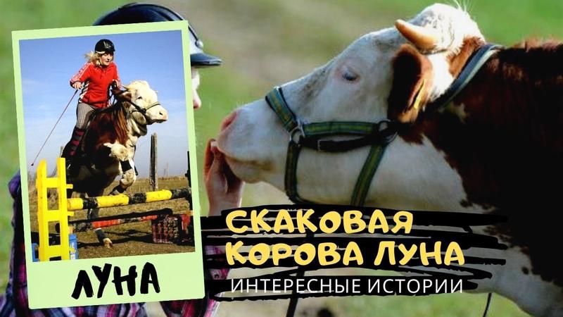 🐎 Скаковая Корова по имени ЛУНА 👍 Интересные Факты
