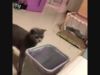 Какими бывают животные