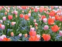 FRANCE MONET s GARDEN at Giverny France in Springtime