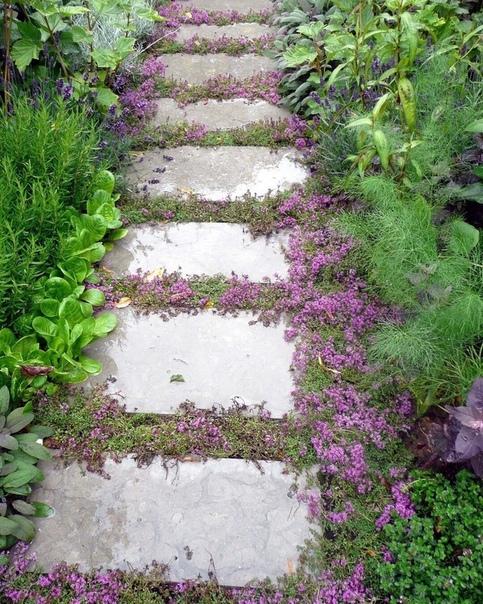 Идея использования цветущих почвопокровных между плитами дорожки