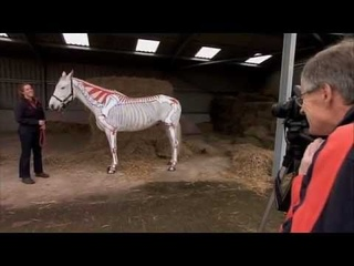 Horses Inside Out on Animals at Work!