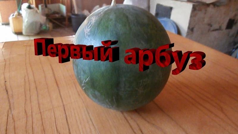 Первый арбуз Сад Зауралья