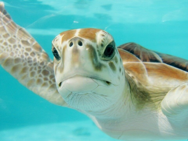 Черепаха, которая прожила больше 500 лет. Интересные факты о черепахах