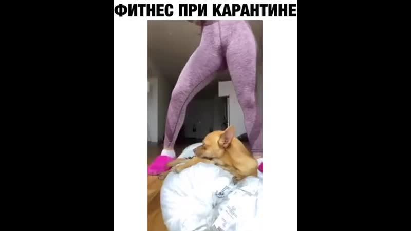Собака которая почти влетит в вашу комнату через монитор