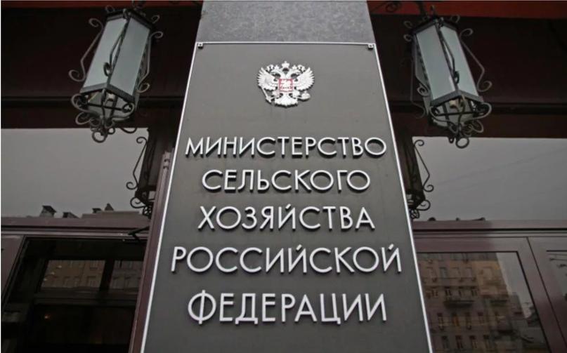 В Минсельхозе России обсудили направления развития пчеловодства, изображение №1