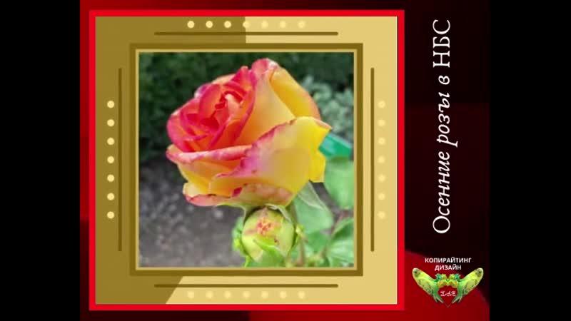 НБС-Розы