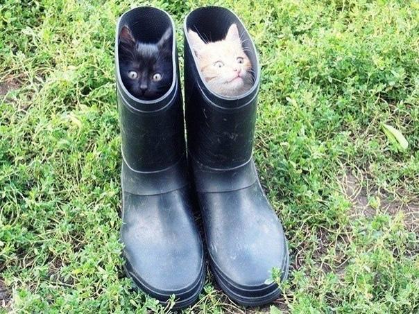Коты в сапогах!