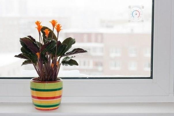 Помогите комнатным растениям