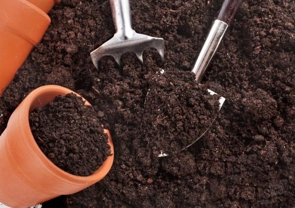 Оптимальные составы грунта для рассады разных культур Огурцы и тыква1. Смесь перегноя и дерновой земли в соотношении 1:1 с добавлением стакана древесной золы на 10 л.2. Смесь торфа, компоста,