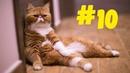 10 Смешные коты 😹 Приколы с кошками 2021 🤣 Смейся до слез 😂 Смешные котики