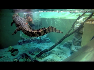 NRL Cowboys enter the Underwater Kingdom of Burt the Star of Crocodile Dundee