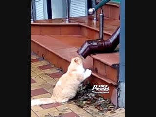 Котик пьёт воду из сточной трубы  -   - Это Ростов-на-Дону!