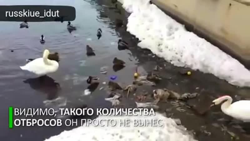Лебедь и Гадкие утята Пример людям