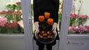 Как выглядит 3 розы в колбе Купить вечную розу в колбе в Минске