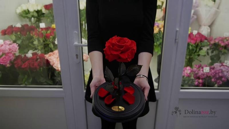Как выглядит красная роза в колбе купить в Минске с доставкой