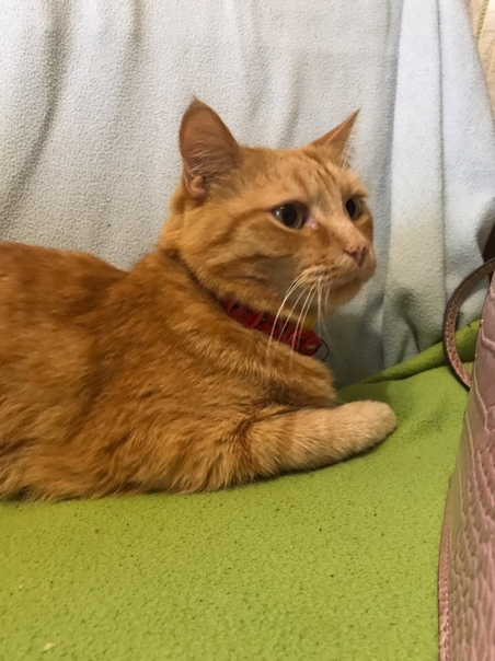 Школьницы расчленили кота, чтобы продать его череп. Дикая история пришла к нам из Новосибирска. 5 августа местная жительница в социальных сетях сообщила, что ее котик пропал и попросила помощи в