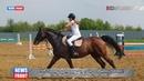 В ЛНР прошел турнир по конкуру посвященный погибшему тренеру спасавшей лошадей от обстрелов ВСУ