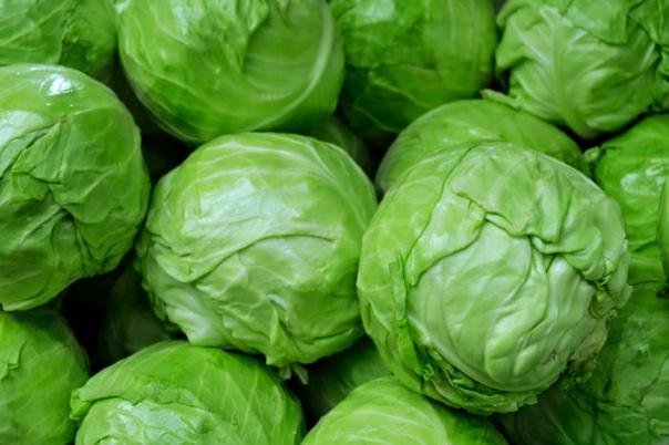 Обзор 5 лучших новинок сортов капусты белокочанной