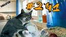 КОШКИ 2019 Смешные коты приколы с котами до слез Смешные кошки 2019 Funny Cats Выпуск 241