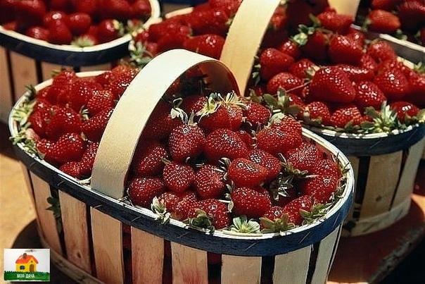 Мой сосед жалуется, что не успевает собирать ягоды - их так много