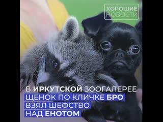 История одной дружбы из Иркутска, которая точно заставит Вас улыбнуться