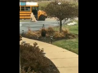 Каждое утро хороший мальчик присматривает за своими человеками до посадки в школьный автобус