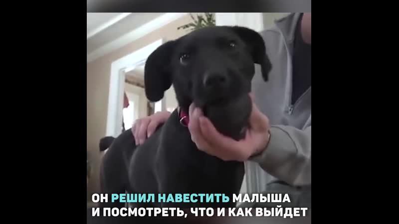 Хозяин и собака - оба глухие
