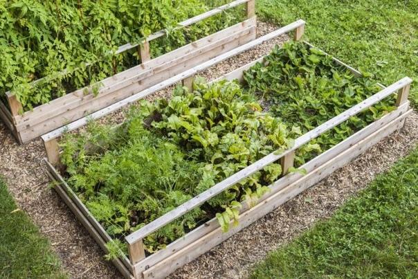 Что с чем сажать рядом: выгодное соседство овощей
