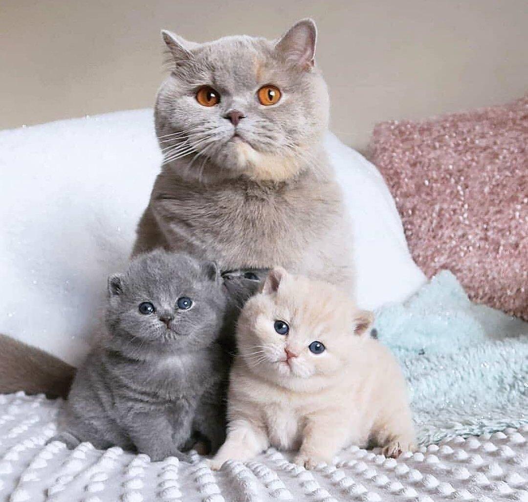 Семейный портрет в пОстельных тонах.