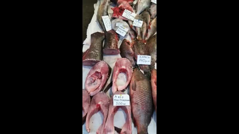 речнаяРыба ИринаРыбаРечная❗😍👉🐟ТОЛЬКО У НАС В АЛЬМЕТЬЕВСКЕ❗ Свежее поступление и самый большой ассортимент рыбы и морепродуктов