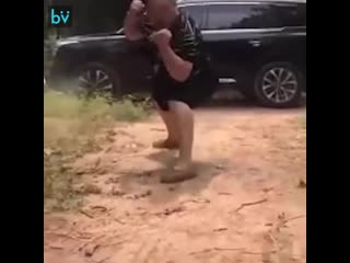 Кунг-фу панда в реальности