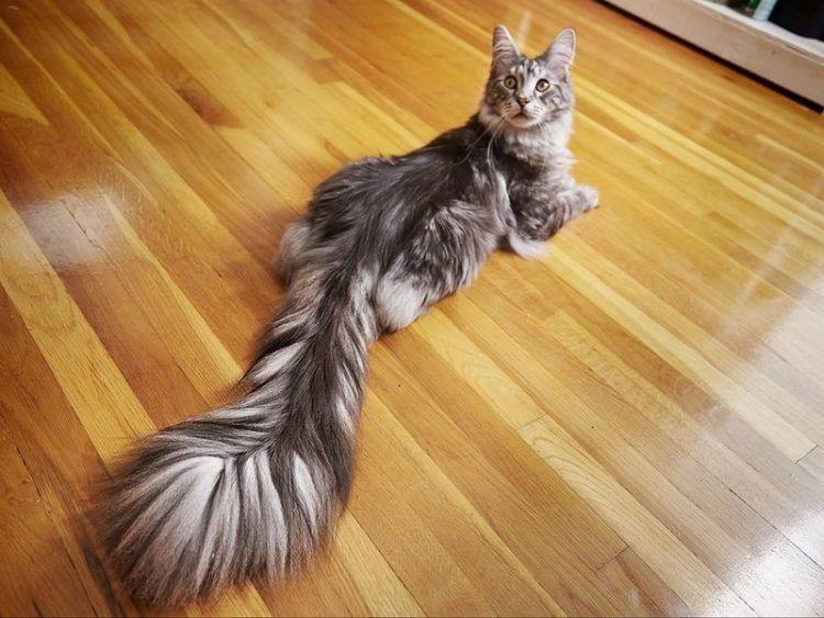 Это точно кот?