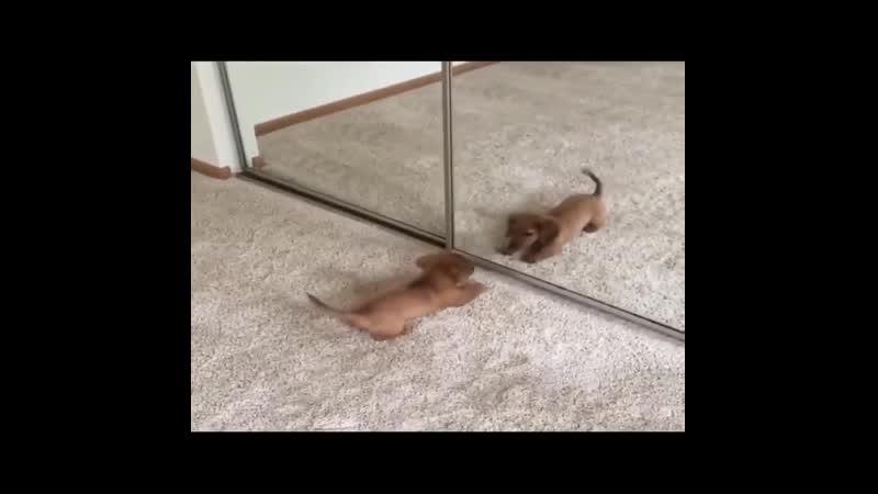 Смешные животные 1 животные и зеркало online video