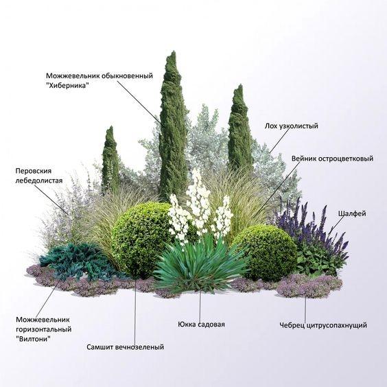 Хвойные любят все садоводы, а вот как их красиво посадить знают не все