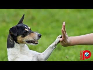 Послушный друг человека: как воспитать собаку