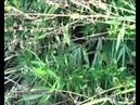 Жителю Новочебоксарска вынесли приговор за незаконное выращивание конопли