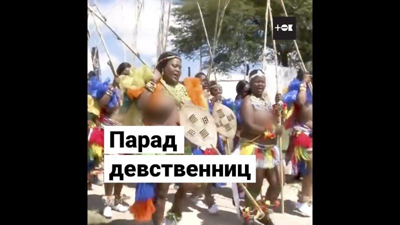 Праздник тростника жены для короля Свазиленда