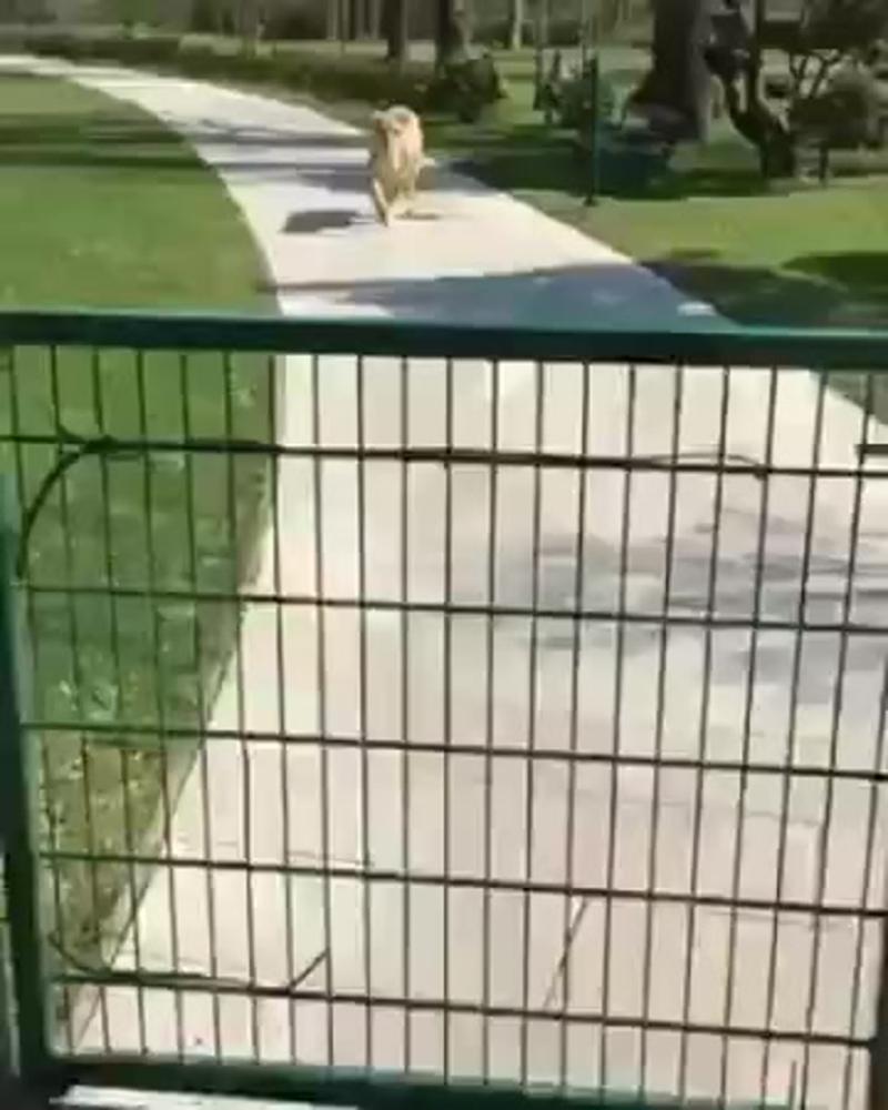 Симпотичные котята