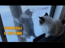 Смешные коты и котики 3 Приколы с котами