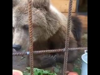 В петербургском центре спасения диких животных «Ве...