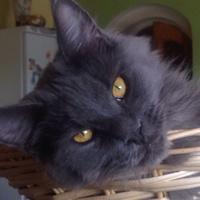 Фото профиля Лолы Золотаевой