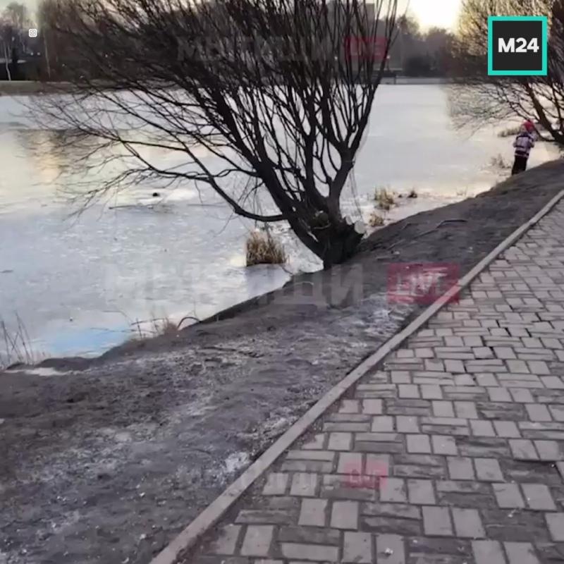 В Мытищах девушка бросилась в воду и спасла провалившуюся под лёд собаку — Москва 24