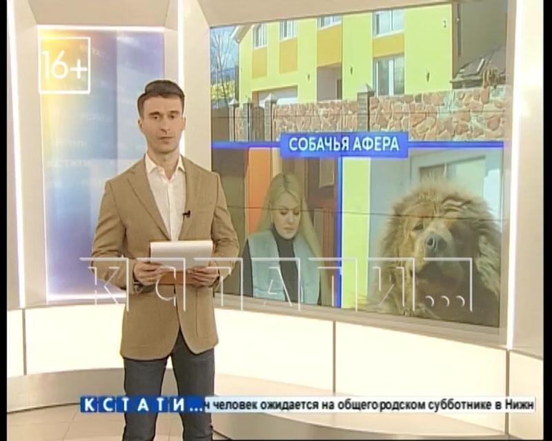 Жительница Сормова обманула граждан Китая, продав за 2млн. руб. несуществующего щенка.