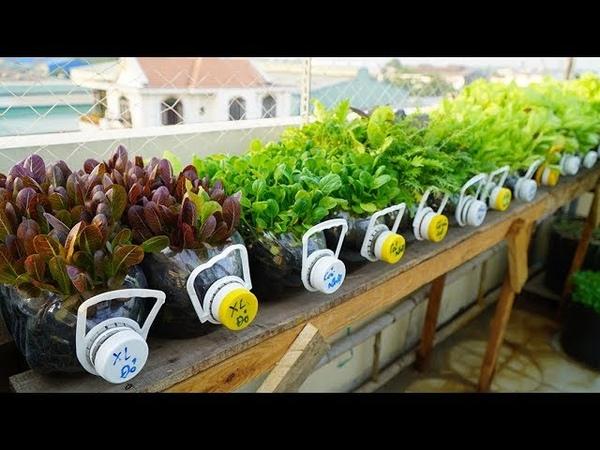 Tái chế hàng loạt chai nhựa trồng cải ăn non Recycle series of plastic bottles grow mustard greens