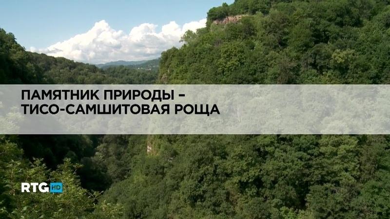 022 Памятник природы Тисо Самшитовая роща RTG TV HD