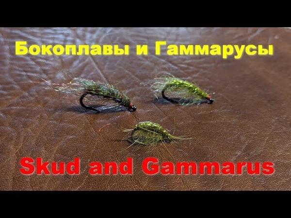 Нимфы Sсud and Gammarus Бокоплавы и Гаммарусы
