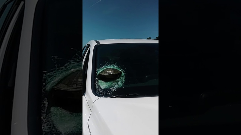 'He's Stuck There' Motorist Shaken After Turtle Smashes Through Windscreen on Georgia Highway
